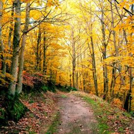 San-Martin-de-Trevejo-nature-spain-tourism-The-most-beautiful-Villages-of-the-World